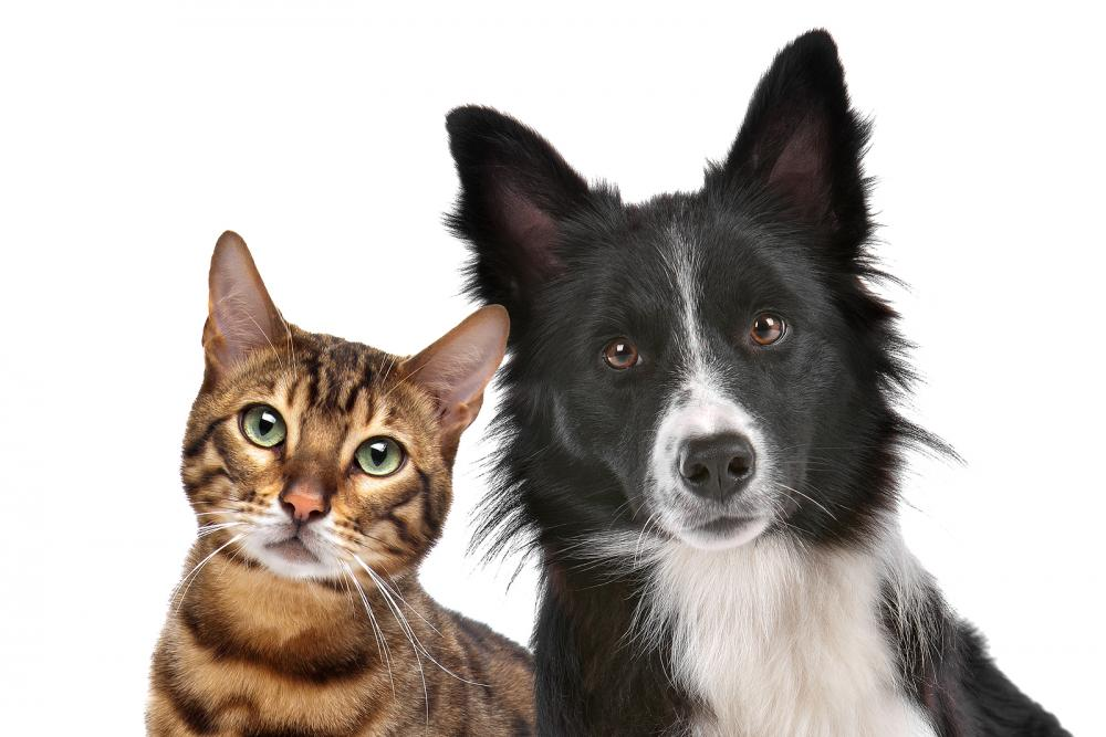 Are you looking for a veterinarian in Bloomington, IL? At Fairway Knolls Veterinary Hospital, we treat every pet like part of the family. Call us today!